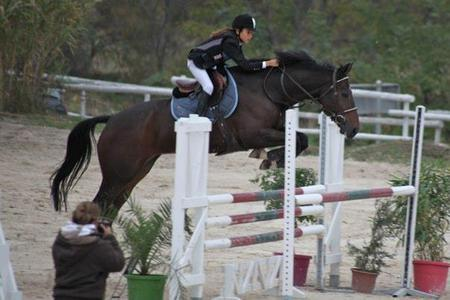 Centre Equestre Grammont Montpellier Jumping